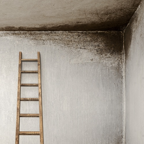 How to Recognize Mold Problems